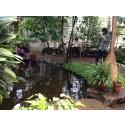 Botaniska trädgårdens nyhetsbrev