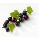 Svarta Vinbär (Ribes nigrum)