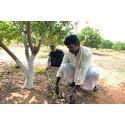 FAO och EU gör gemensam satsning på klimatsmart jordbruk