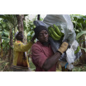 Rettferdig handel bekjemper klimaendringer