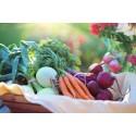 Kommunen satsar för att minska klimatpåverkan från mat