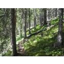 Pressinbjudan: Välkommen på invigning av fyra nya naturreservat i Älvdalens kommun
