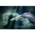 Havets Hus och WWF släpper ut fridlyst haj i havet