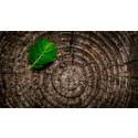 Fortsatt hög betalningsvilja för miljövänligt byggmaterial