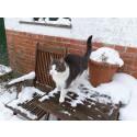 Katte dumpes og indfangning saboteres!
