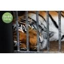 Stöd arbetet mot illegal handel med utrotningshotade djurarter  i insamling till WWF