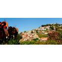 Nyhet! Først i Europa med familiehotell på Madeira