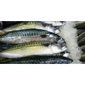 Hemming (C): Landstinget stödjer Stockholms fiskauktion med 150 000 kronor