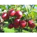 Et godt norsk epleår