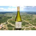 Unikt vitt vin från Uruguay