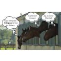 Almi Invest investerar i Videquus övervakningssystem för hästar