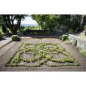 Wahlmans knot garden.