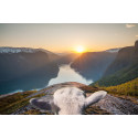 Frida the sheep in the fjords