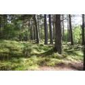 Matkailijat suuntaavat tänä kesänä kansallispuistoon – metsässä samoilu kiinnostaa nyt myös ulkomaalaisia