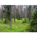 WWF välkomnar nya förslaget till FSC-standard för skogsbruk i Sverige