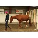 Hästsport på hästens villkor!