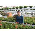 Hephata-Gärtnerei: Gewächshäuser mit Sommerblumen wieder geöffnet