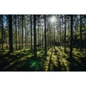 Utvidgning av Natura 2000-område sätter stopp för fortsatt täktverksamhet på Gotland