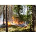 Naturvårdsprojekt möjliggör flera naturvårdsbränningar i länet