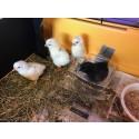Kyllinger i Universet studentbarnehage - Prikken, Solflekken, Vesla og Batman.