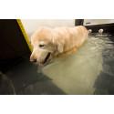 Ökat intresse för rehabilitering av hundar