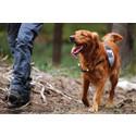 """Europas främsta hundexperter på väg till Göteborg – premiär för """"Sporting Dog Seminar"""""""