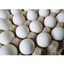 Lehdistötiedote: Kananmunan tuotantomuodot antavat kuluttajalle vaihtoehtoja