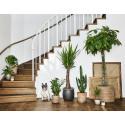 Växter i alla storlekar - gröna växter 2018