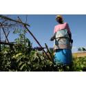 Det er afgørende at verdens fattige involveres i grøn omstilling