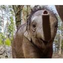 Video: Kungliga elefantkalven Prince första bad