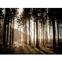 Förpackningsjätten Smurfit Kappa når ny milstolpe i arbetet för ett hållbart skogsbruk