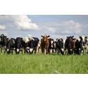 Samverkan kring rådgivning mjölk för att möta framtiden