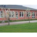 Skolinspektionen ger Mackleanskolan genomgående grönt ljus
