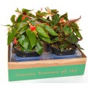 Blomsterboxen6