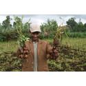 SLU Global. Harvest2.