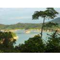 Turismen tar över som viktigaste inkomstkällan från skogsindustrin i Borneo