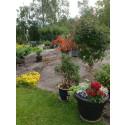 Gun-Britts trädgård i Lindesberg - en av Tusen Trädgårdar