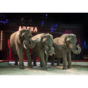 Brogaarden hjælper karantæne-ramte cirkuselefanter
