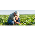 Crop Protection Insecticides Market Opportunities, Demands, Size, Share, Trends, Industry Sales Area and Its Competitors by 2023