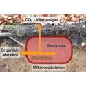 Skogsmarkens kolinlagring kan bli mindre än väntat i ett varmare klimat