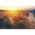 Nouryon bringt nachhaltiges Dispergiermittel für landwirtschaftliche Formulierungen auf den Markt