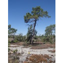 Glädjande att Ojnareskogen skyddas för framtiden