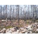 Skogsbranden i Västmanland