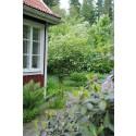 Trädgård för lata dagar - drömmen för husspekulanter