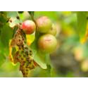 Skolelever hjälper forskare att kartlägga insektslivet i ekarnas höstlöv