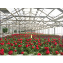Pressinbjudan: Öppet hus i växthusen på Sylten