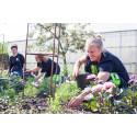 Hvilan Utbildning deltar i Nordic Horticulture
