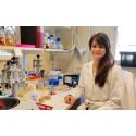 Prestigefyllda postdoktorstipendier för malariaforskning i Umeå
