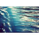 Fiskefria områden införs för att skydda känsliga miljöer i Bratten