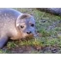 Skånes Djurparks djur blir TV-kändisar